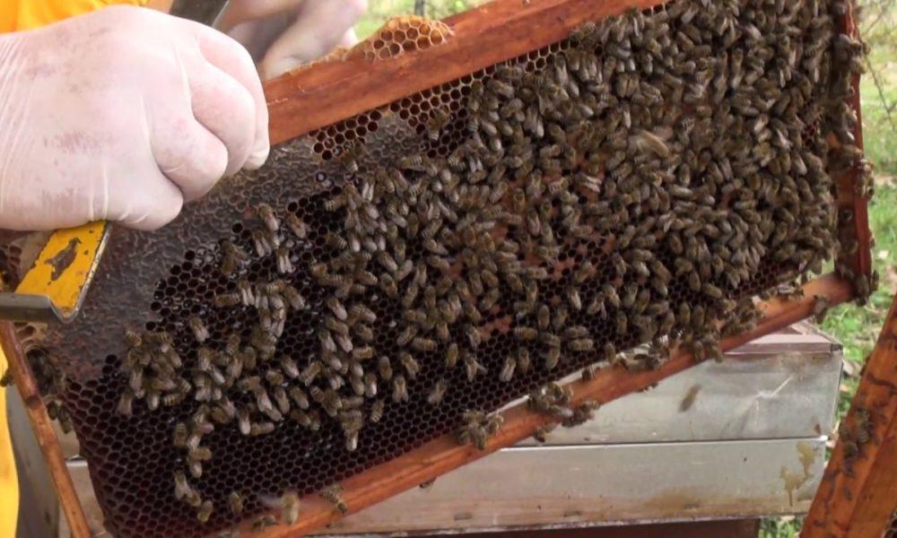 Šta Ne Znamo O Pčelama, šta Trebaju Znati Pčelari, A šta Kupci Proizvoda Od Pčela