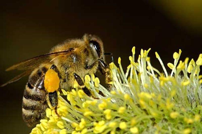 Zaštita Pčela I Drugih Oprašivača Kroz Bolju Saradnju Pčelara-voćara–povrtlara I Ratara