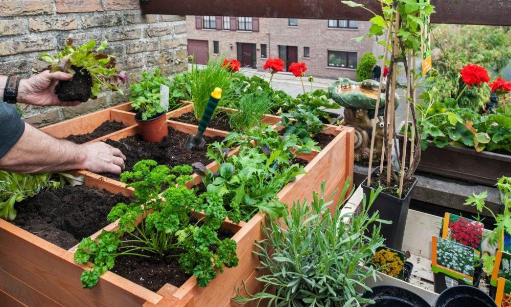 Korisni Savjeti – Koliko Zemljišta I Posla Je Potrebno Da Prosječna Bh. Porodica Proizvodi Hranu Za Sebe